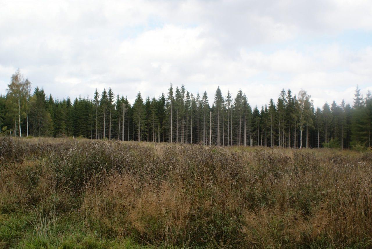Duurzame bossen